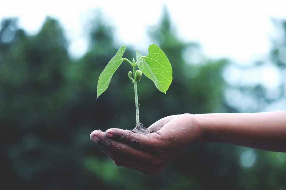 person hold a green plant